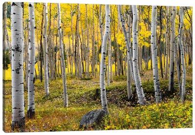Golden Times - Rockies Canvas Art Print