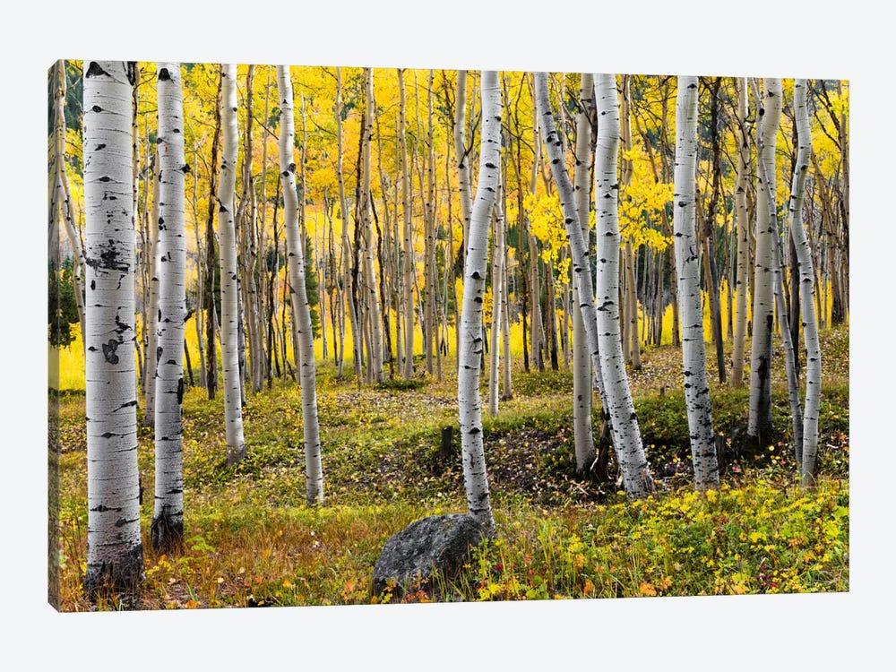 Golden Times - Rockies by Stefan Hefele 1-piece Art Print