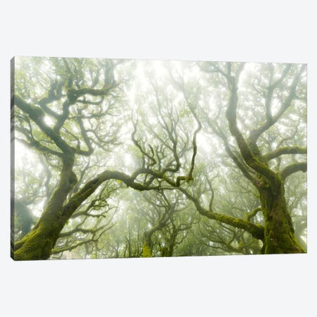 Green Fire Canvas Print #STF80} by Stefan Hefele Canvas Art Print