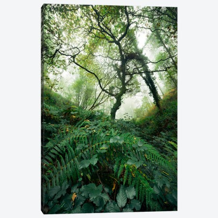 Inside The Woods Canvas Print #STF87} by Stefan Hefele Canvas Wall Art