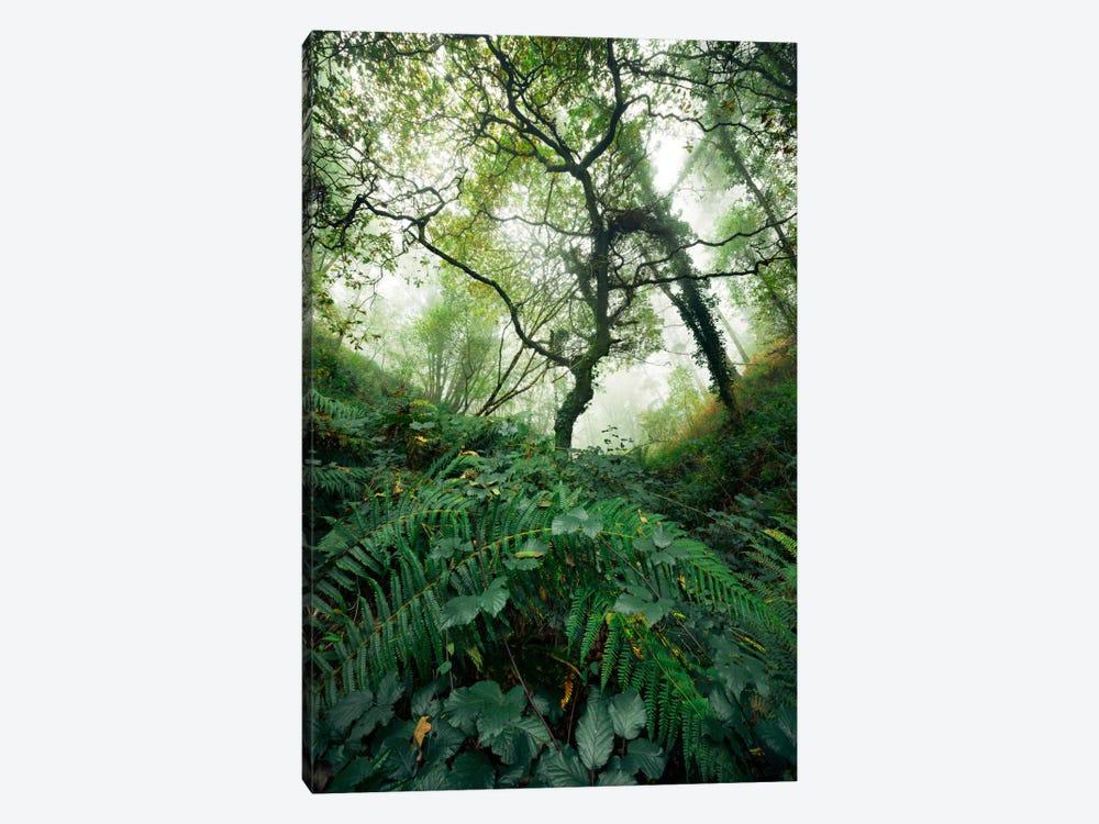 Inside The Woods by Stefan Hefele 1-piece Canvas Art Print