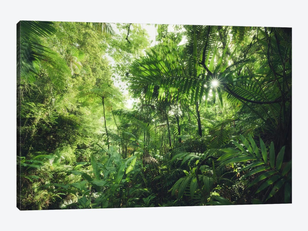Into The Jungle - Caribbean by Stefan Hefele 1-piece Canvas Artwork