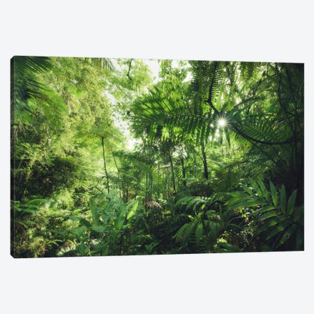 Into The Jungle - Caribbean Canvas Print #STF88} by Stefan Hefele Canvas Print