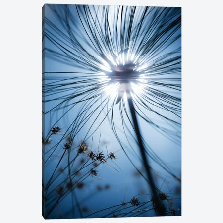 Jardin Botanique Canvas Print #STF90} by Stefan Hefele Canvas Wall Art