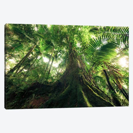 Jungle King Canvas Print #STF91} by Stefan Hefele Canvas Art