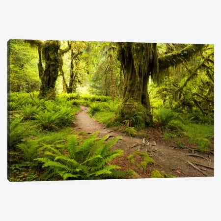 Jungle Path - Hoh Rainforest, Washington State Canvas Print #STF92} by Stefan Hefele Canvas Wall Art