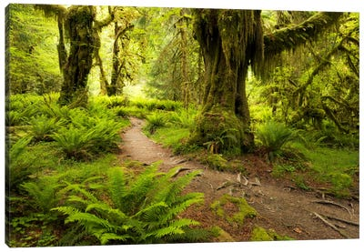Jungle Path - Hoh Rainforest, Washington State Canvas Art Print
