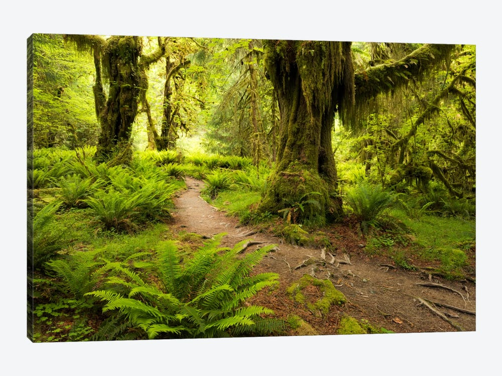 Jungle Path - Hoh Rainforest, Washington State by Stefan Hefele 1-piece Canvas Art Print
