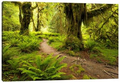 Jungle Path - Hoh Rainforest, Washington State Canvas Art Print