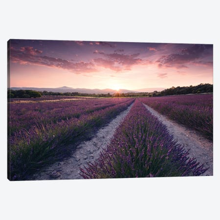 Lavender Dream Canvas Print #STF96} by Stefan Hefele Canvas Art Print