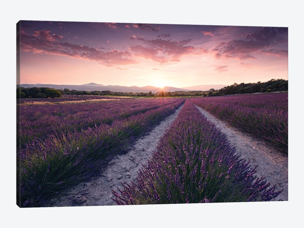 Lavender Dream by Stefan Hefele 1-piece Art Print