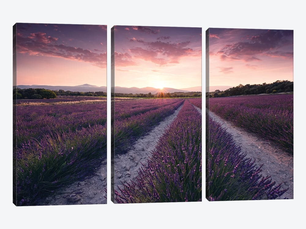 Lavender Dream by Stefan Hefele 3-piece Canvas Print