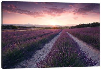 Lavender Dream Canvas Art Print