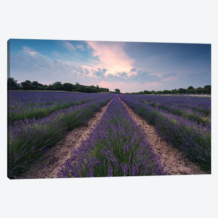 Lavender Paradise Canvas Print #STF97} by Stefan Hefele Canvas Art Print