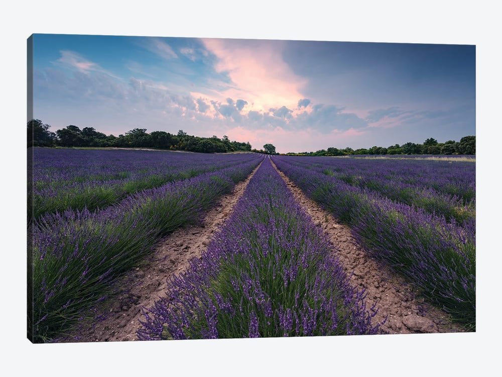Lavender Paradise by Stefan Hefele 1-piece Canvas Wall Art