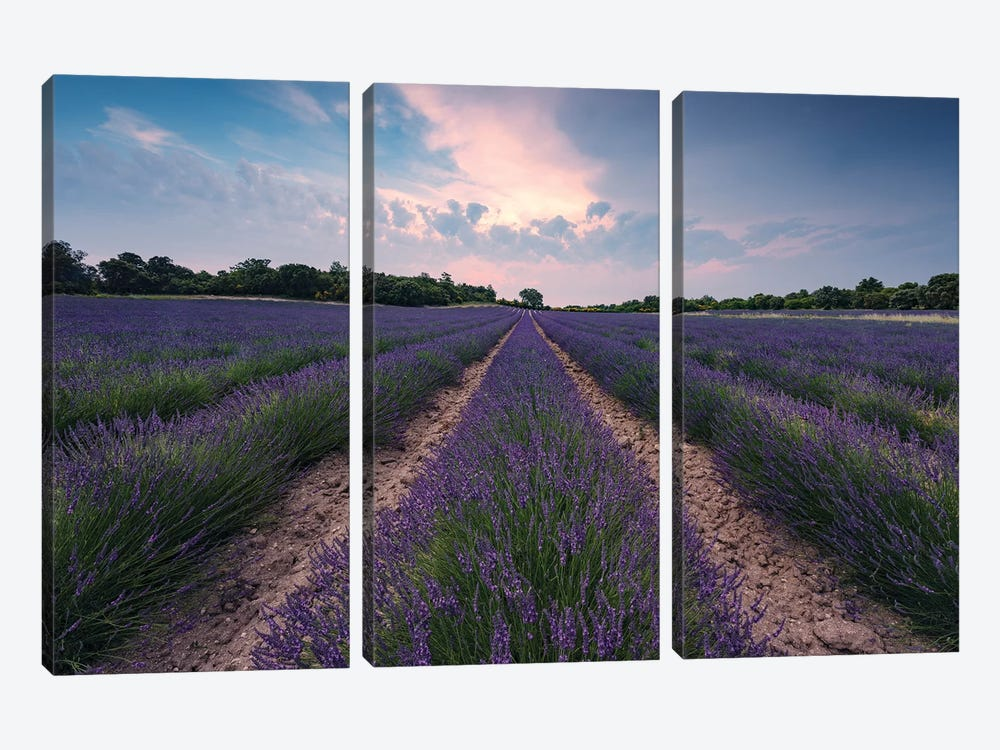 Lavender Paradise by Stefan Hefele 3-piece Canvas Art