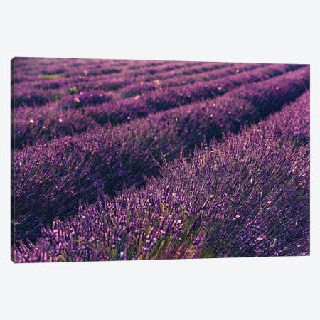 Lavender Symphony I Canvas Print #STF98} by Stefan Hefele Canvas Artwork