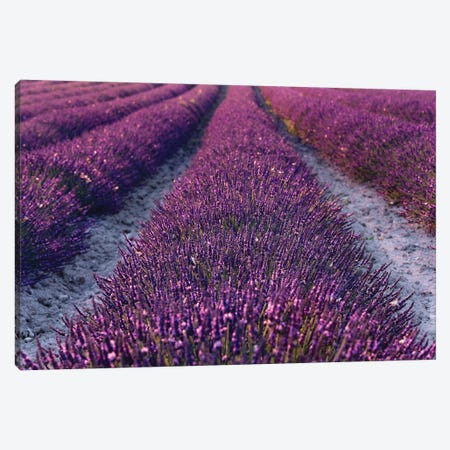 Lavender Symphony II Canvas Print #STF99} by Stefan Hefele Canvas Wall Art