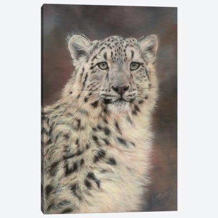 Snow Leopard Portrait Canvas Print #STG100} by David Stribbling Canvas Artwork