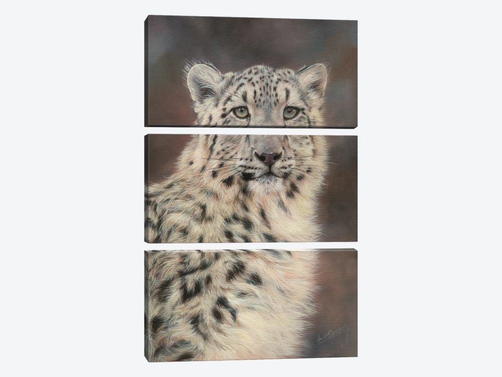 Snow Leopard Portrait by David Stribbling 3-piece Canvas Wall Art