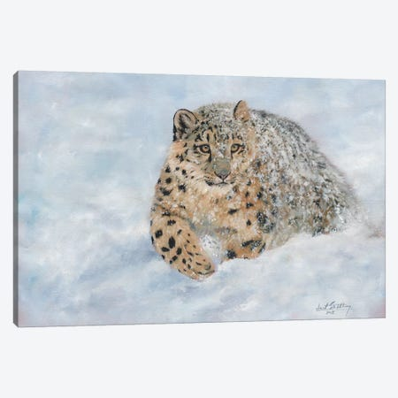 Snow Leopard Snow Final Canvas Print #STG101} by David Stribbling Canvas Art