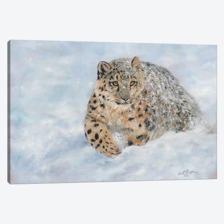 Snow Leopard Snow Final Canvas Print #STG101} by David Stribbling Canvas Art