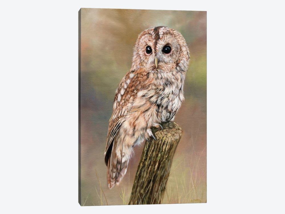 Tawny Owl by David Stribbling 1-piece Canvas Artwork