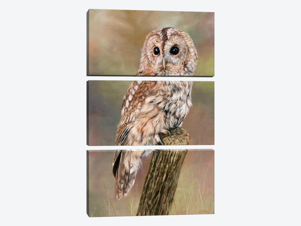 Tawny Owl by David Stribbling 3-piece Canvas Artwork