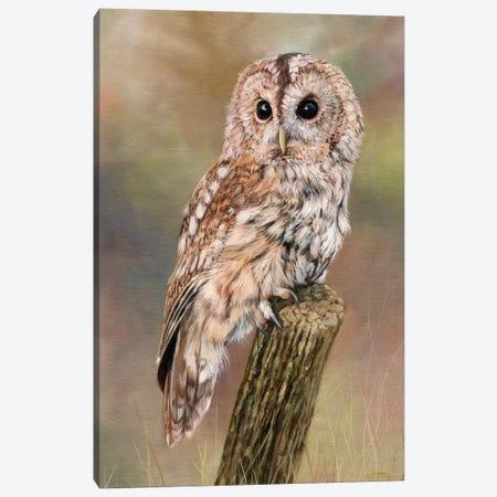 Tawny Owl 3-Piece Canvas #STG102} by David Stribbling Canvas Artwork