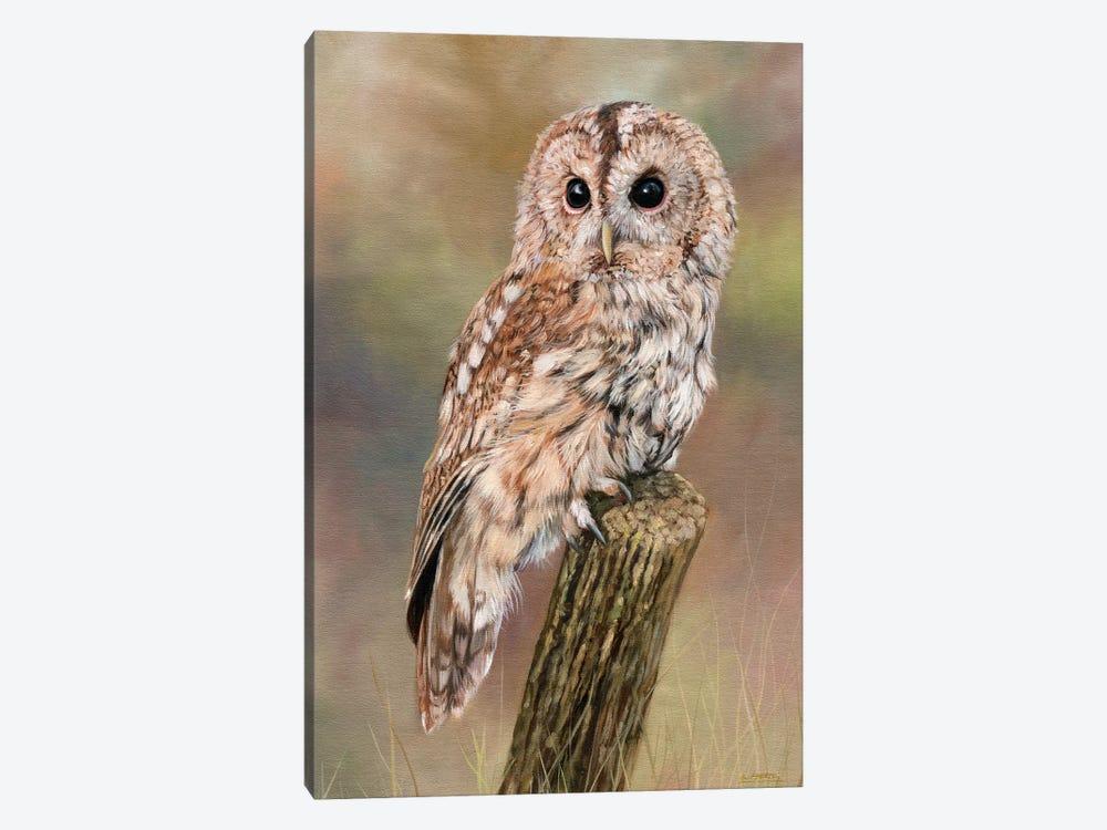 Tawny Owl by David Stribbling 1-piece Canvas Artwork