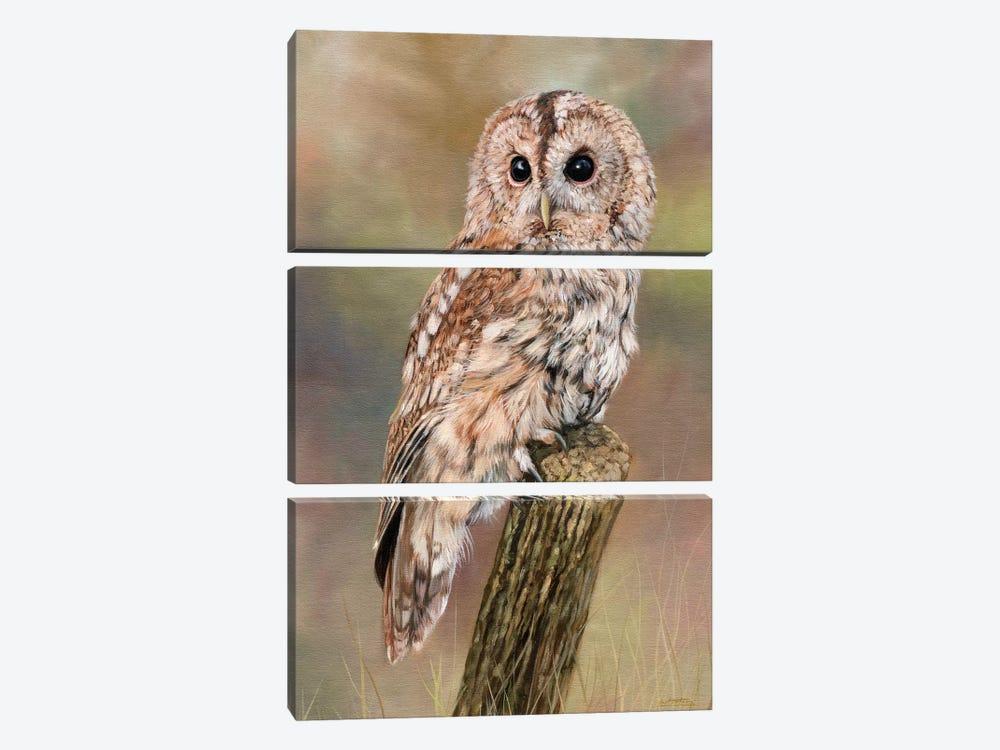 Tawny Owl by David Stribbling 3-piece Canvas Artwork