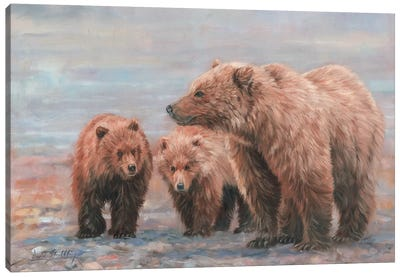 Three Bears by David Stribbling Canvas Art Print