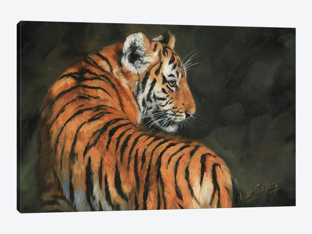 Tiger At Night by David Stribbling 1-piece Canvas Print