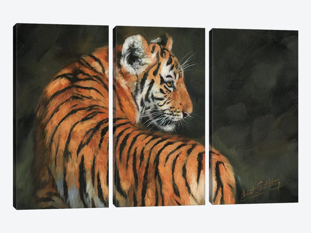 Tiger At Night by David Stribbling 3-piece Canvas Print