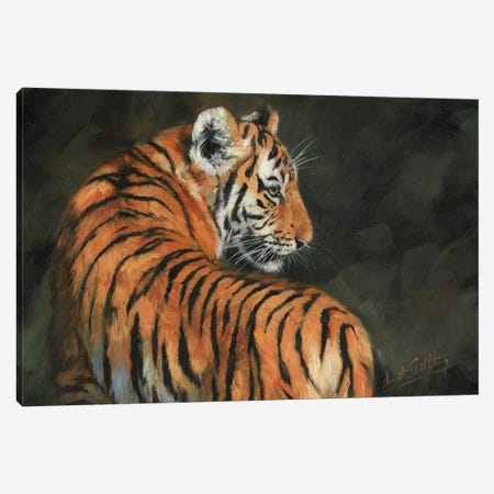 Tiger At Night 3-Piece Canvas #STG105} by David Stribbling Art Print