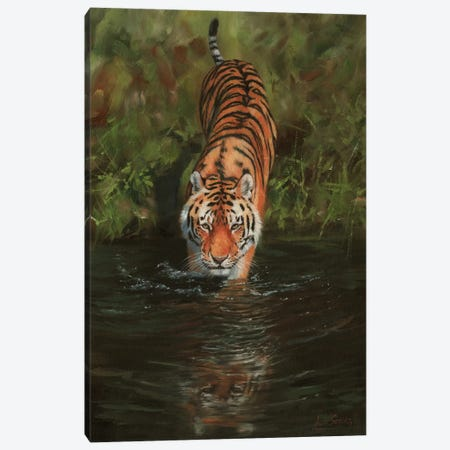 Tiger Cooling Off Canvas Print #STG106} by David Stribbling Art Print