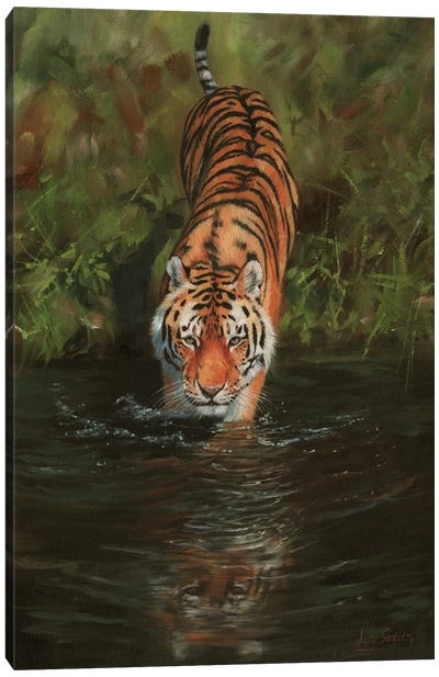 Tiger Cooling Off Canvas Art Print