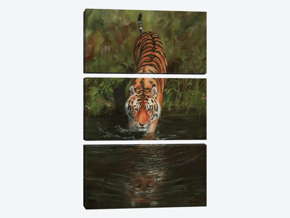 Tiger Cooling Off by David Stribbling 3-piece Canvas Artwork