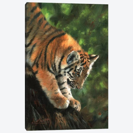 Tiger Cub Climbing Down Tree 3-Piece Canvas #STG107} by David Stribbling Canvas Print