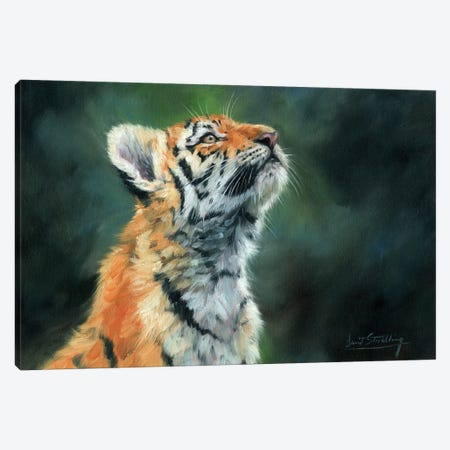 Tiger Cub Looking Up Canvas Print #STG108} by David Stribbling Canvas Wall Art