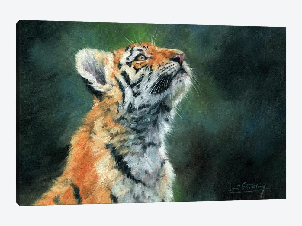 Tiger Cub Looking Up by David Stribbling 1-piece Canvas Wall Art