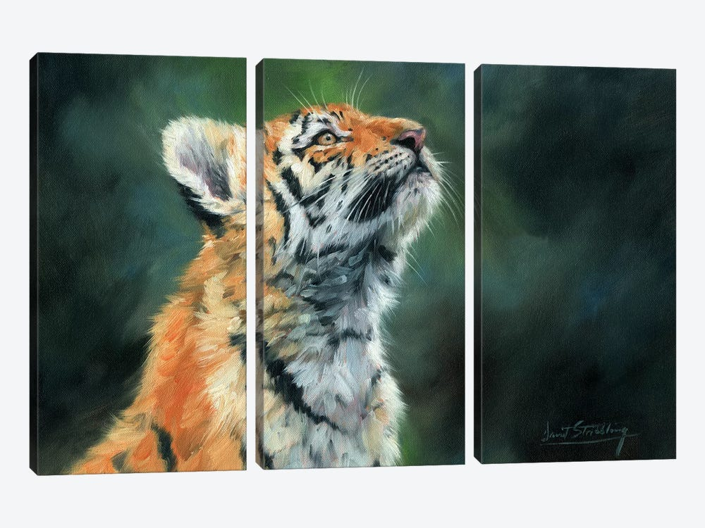 Tiger Cub Looking Up by David Stribbling 3-piece Canvas Art