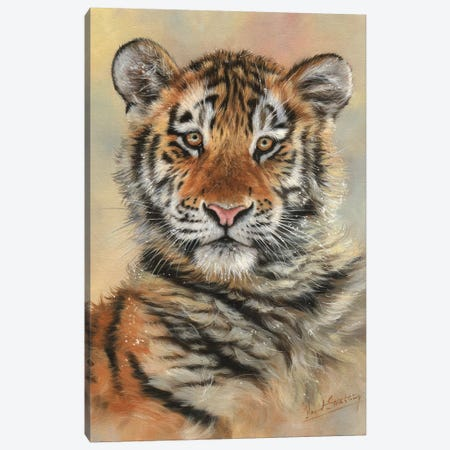Tiger Cub Portrait Canvas Print #STG109} by David Stribbling Canvas Artwork