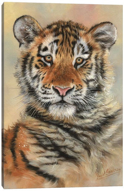 Tiger Cub Portrait by David Stribbling Canvas Art Print