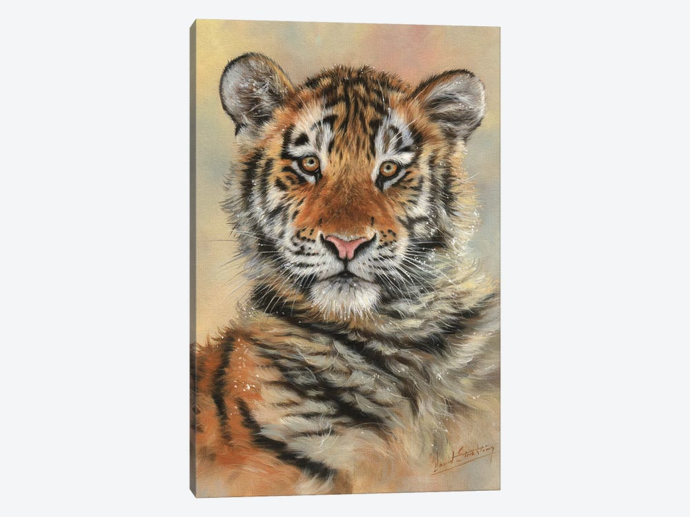 Tiger Cub Portrait by David Stribbling 1-piece Canvas Art Print