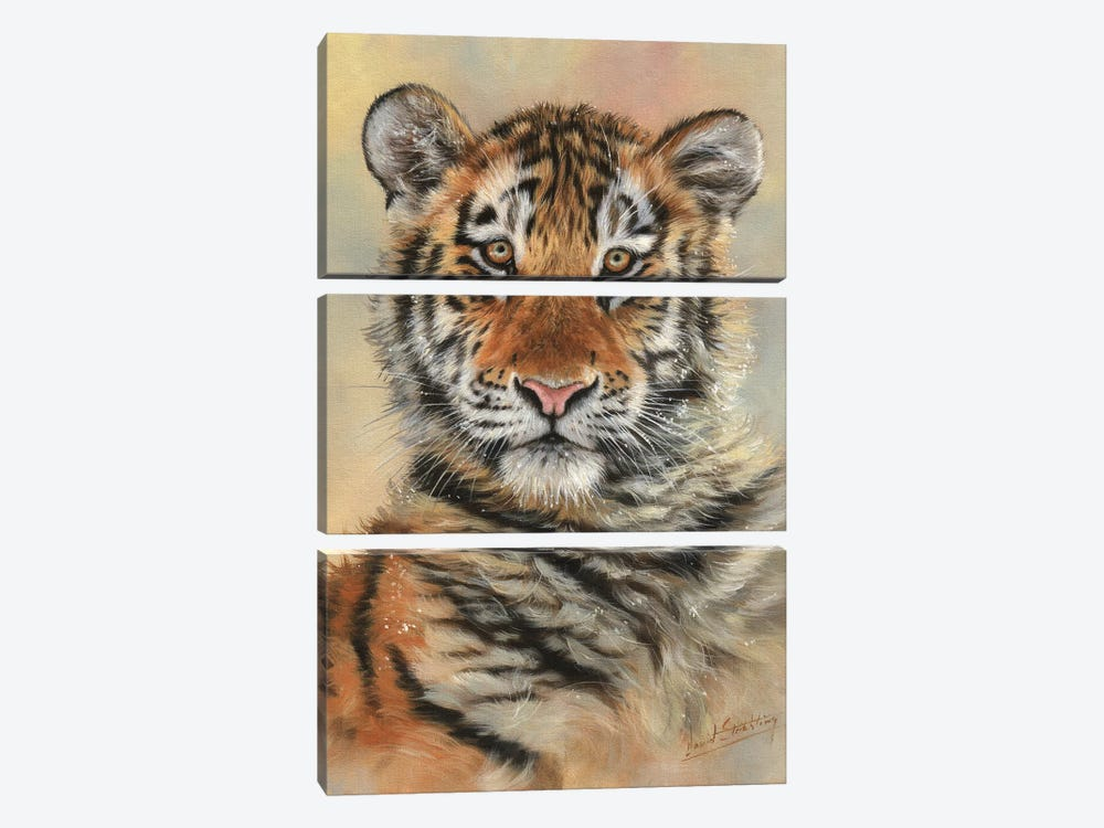 Tiger Cub Portrait by David Stribbling 3-piece Canvas Art Print
