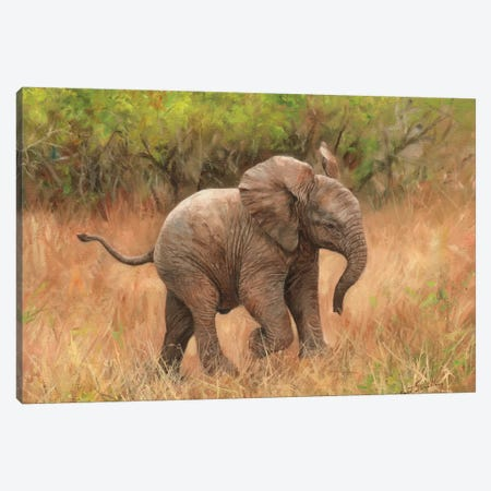 Baby African Elephant Canvas Print #STG10} by David Stribbling Art Print