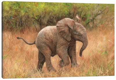 Baby African Elephant by David Stribbling Canvas Art Print