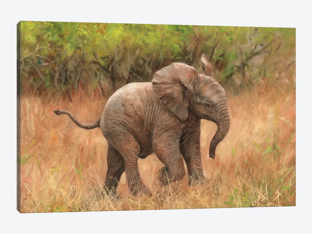 Baby African Elephant by David Stribbling 1-piece Canvas Art