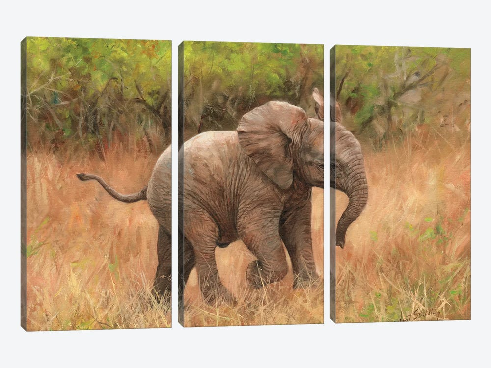 Baby African Elephant by David Stribbling 3-piece Canvas Wall Art